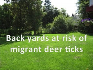 Study finds deer ticks migrate short distances without the help of vertebrae hosts or birds.
