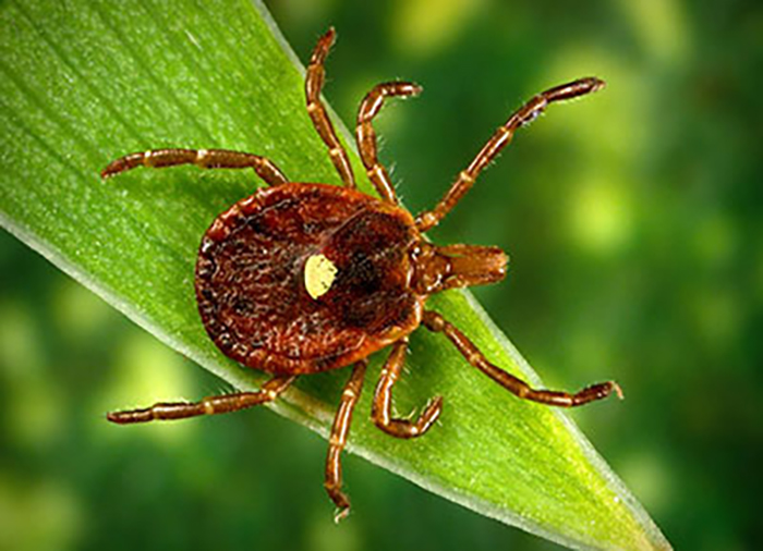 Travelers heading south cannot escape the threat of tick-borne diseases