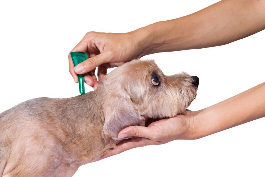 Dog Tick Prevention Canada