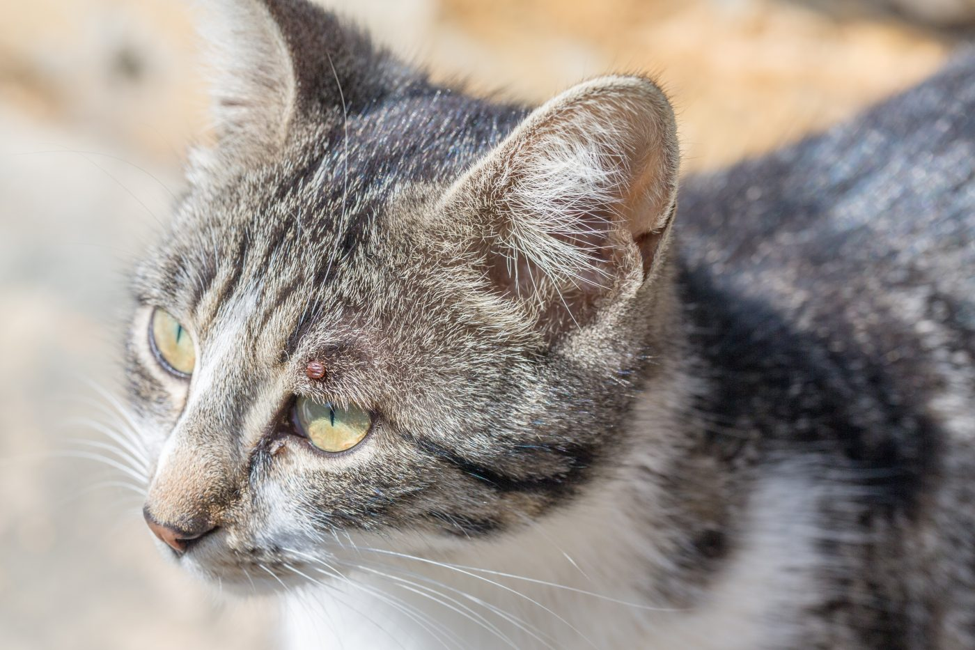 Что делать если у кота глаз слезится фото