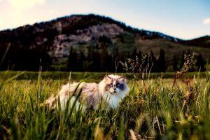 cat, tick-borne diseases, lyme disease
