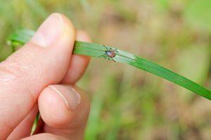 tick, deer tick, powassan virus, tick-borne disease