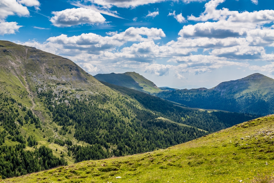 ticks live in alps mountains